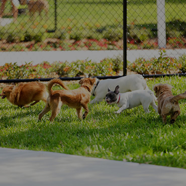 Large Dog Park at Cedar Square Apartments